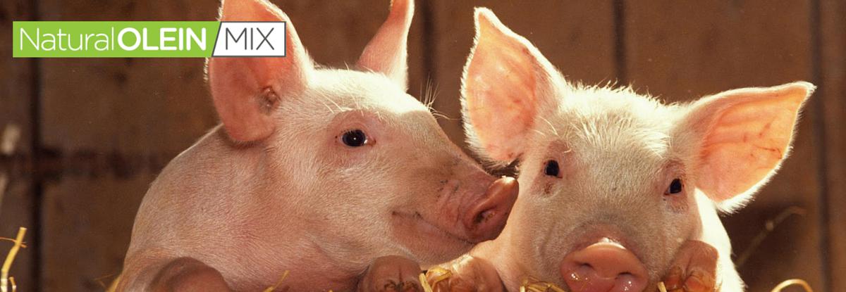 Suplemento alimenticio para cerdos